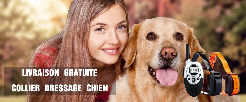 dressage chien 80